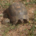 Senja und Turtles 005